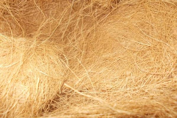 coconut-fiber1D346F822-55A4-0B63-E7A7-133D2355D749.jpg